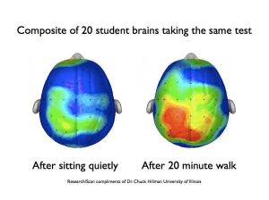 brain after walk